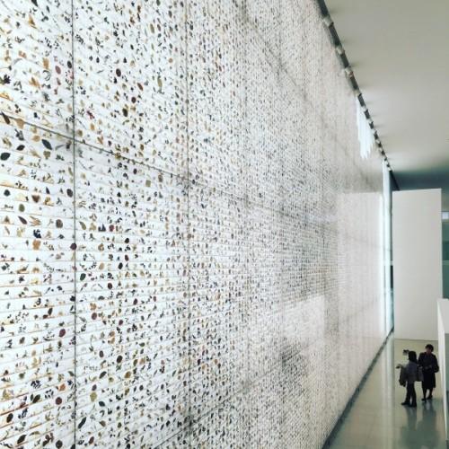 豊田市美術館 「山口啓介|カナリア」展見てきました