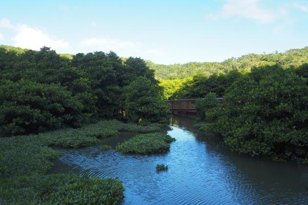 熱帯雨林という感じ