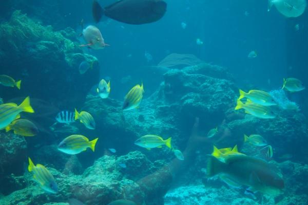 きれいなお魚いっぱい