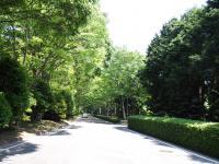 県立美術館への欅の道1
