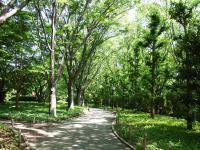 県立美術館への欅の道2