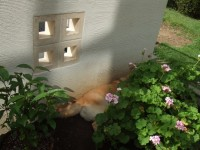 花壇の奥に もみじ は自分の居場所を確保