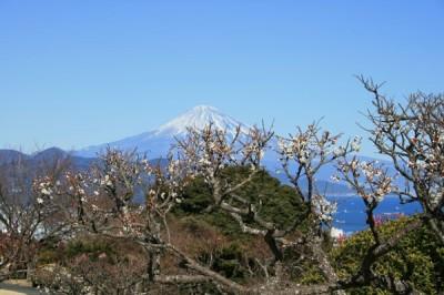 日本平へ梅を見に