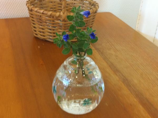 小樽で買った花挿し