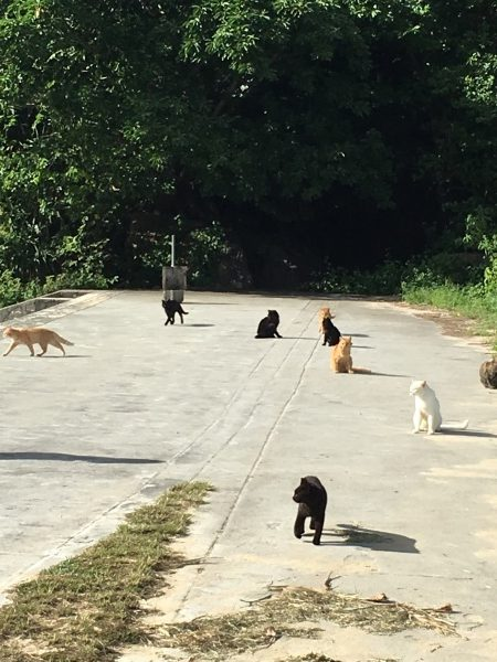 ネコの軍団がいました