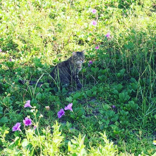 ネコと沖縄の花