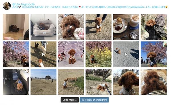 備忘録:WordPressプラグイン「Instagram Feed」有料版を使う機会があったのでメモ