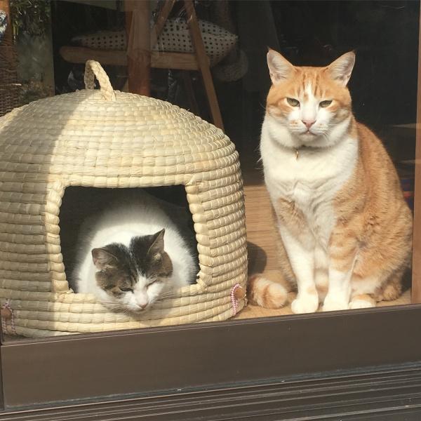 かわいい看板猫ちゃんがお出迎え