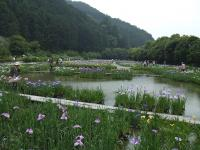 加茂花菖蒲園2