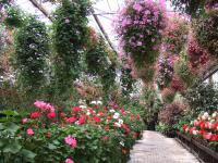 多目的温室には色とりどりの花が咲いており販売もしています。