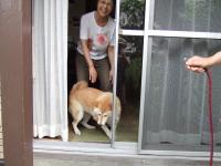 大好きなshihokoさんを見て家に飛び込み1