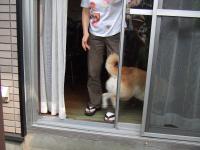 大好きなshihokoさんを見て家に飛び込み2