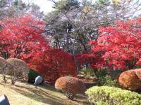 富士ビューホテルの紅葉