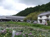 加茂花菖蒲園の睡蓮