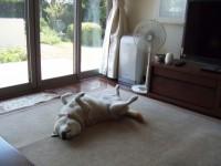 カーペットの上で一日のんびり寝ています。