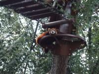 レッサーパンダは樹上から可愛い顔でコンニチハ